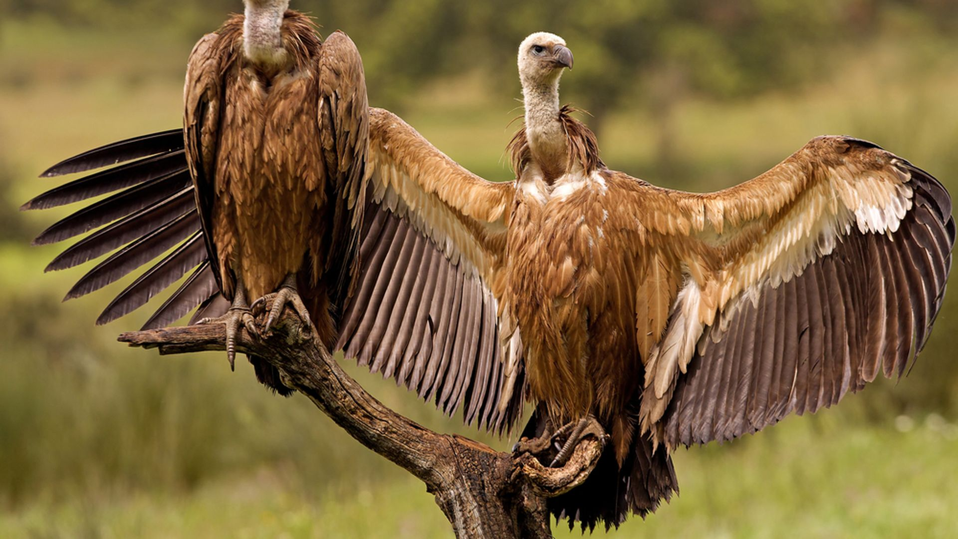 The Vulture: Spirit Animal and Much More
